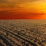В ЮКО площадь пахотных земель сельскохозяйственного назначения увеличилась на 30 тыс. га
