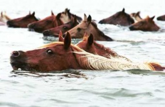 swimming-horse-1