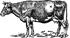 Вздутие живота у теленка что делать