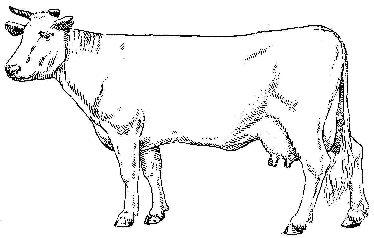 коровы в картинках схема мещерское это