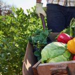 В. В. Лопухин: «Органическое земледелие – это здоровье нации и безопасность страны»
