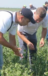 Александр Гринец (ТОО ПТК Содружество) и Тимур Аксагов (ТОО Костанайский НИИСХ) на посевах гороха