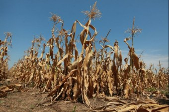 food_crisis_fears_corn_crops_drought_july_2012