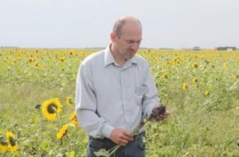 Владимир Радовня осматривает корневую систему подсолнечника