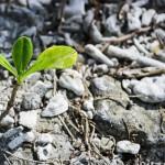 Фиторемедиация против пестицидов