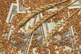Wheat-Money-930589