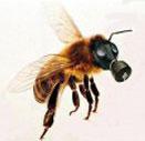 пчелка-во-врезку