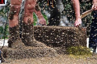 arı-1
