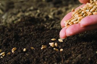 planting_wheat
