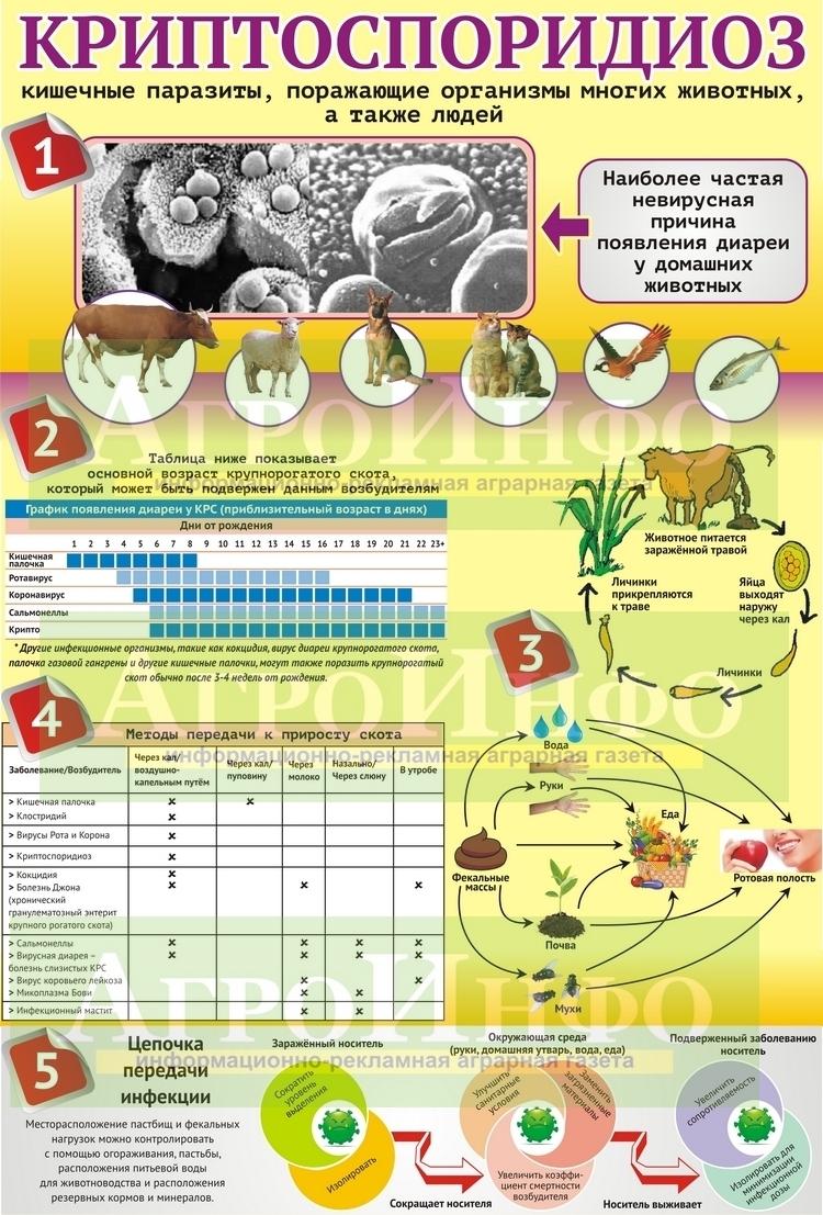 Инфографика (Криптоспоридиоз) А3_02_СО!