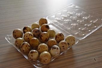 Яйца-перепелов-считаются-полезным-продуктом-копия