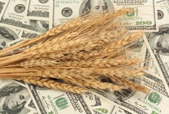 обзор зернового рынка