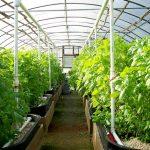 Возможно ли получить субсидии на выращивание овощей в теплице, если эта теплица самодельная?