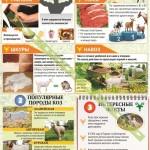 Инфографика по козоводству