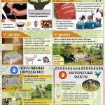 Инфографика «Козоводство»
