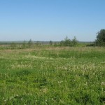 Пути повышения урожайности сенокосов и пастбищ