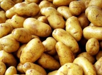 Kartofel 2255