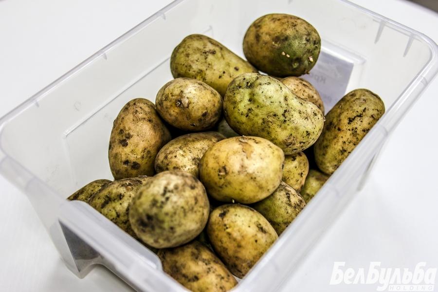 Kartofel_04-1
