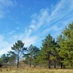 Назарбаев: В 2017 году астанинский лес соединится с национальным парком Боровое