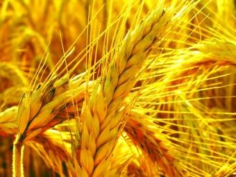 grain_63335