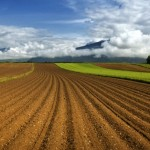 Земельная реформа: вето президента (для анализа)