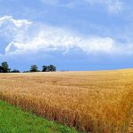 Где можно найти и купить книгу истории полей и севооборота в Караганде (для КХ)?