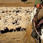 Карагандинца более года держали в рабстве, заставляя пасти овец