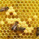 Мне 20 лет, я занимаюсь пчелами. Можно ли мне получить субсидии на пчел?