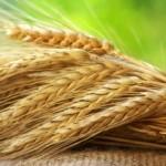 Электронные зерновые расписки обеспечат прозрачность данных