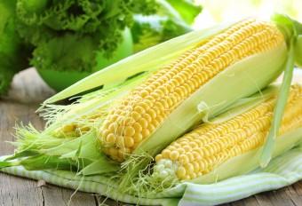 kukuruza-544