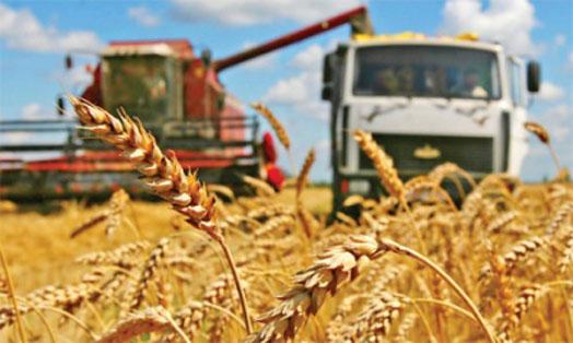 Аграрии Нижегородской области приступят к уборке озимой пшеницы через неделю
