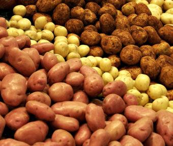 urozhai-kartofelya