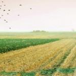 В СКО прокуратурой возвращено в доход государства более 115 неиспользуемых сельхозучастков
