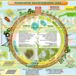 Инфографика «Технология возделывания масличного льна»