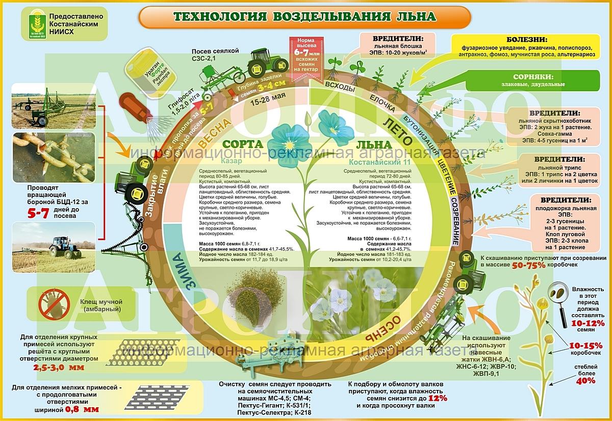 Инфографика (Лён) А3_18_СО-2