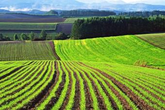 1447134293_agricultural-land