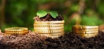 investicii-vyraschivanie-kultur