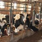 Срок подачи заявок на субсидирование животноводства увеличен – Палата предпринимателей Костанайской области