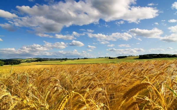 Фото: pxhere.com