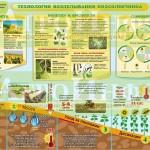 Инфографика «Технология возделывания подсолнечника»