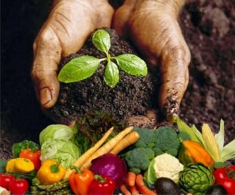 биогумус-и-овощи