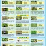 Инфографика «Вредные объекты зерновых культур» (ч. 1)