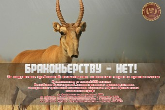 gotov-rus-sajgak
