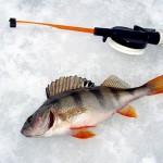 МСХ РК: Любительская рыбалка на незакрепленных водоемах бесплатна до 5 кг