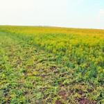 Вопрос моратория на продажу сельхозземель рассмотрит Нацсовет общественного доверия