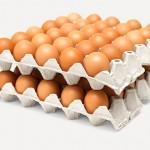 В Акмолинской области запустили самое крупное в стране производство лотков для яиц