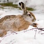 В Кызылорде задержали браконьеров с 54 тушками зайцев