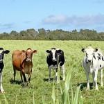 С кем Казахстан будет конкурировать на мировом рынке мяса
