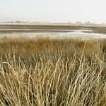 В ЗКО восстанавливают систему лиманного орошения Срымского района