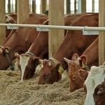В Акмолинской области успешно внедряются современные технологии выращивания скота